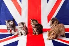 UK cats