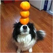 dog-trick