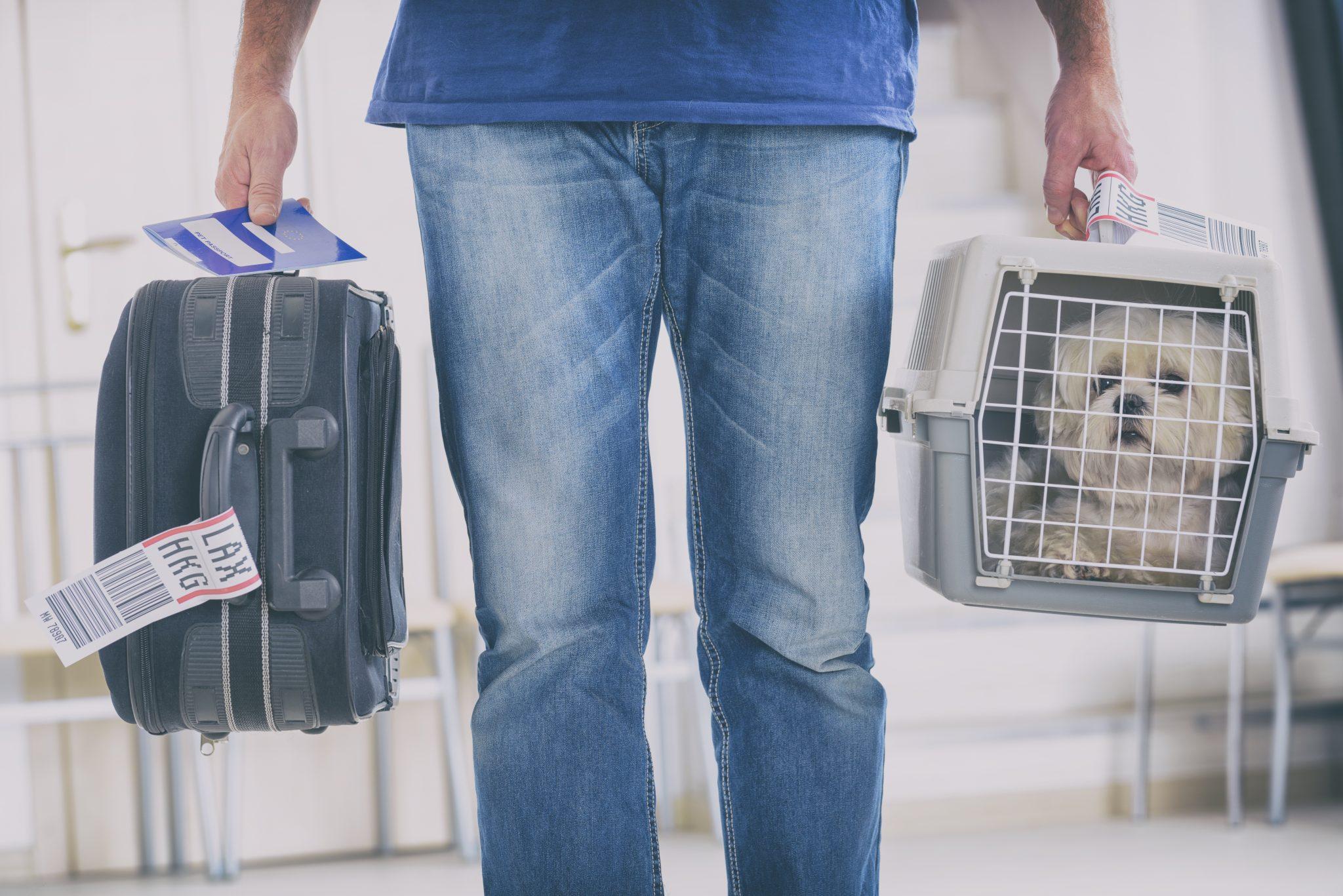 international pet shipping