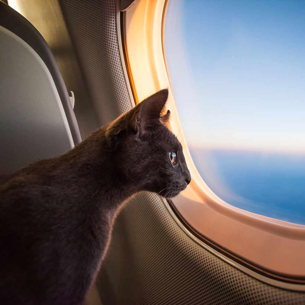 Cat Traveling