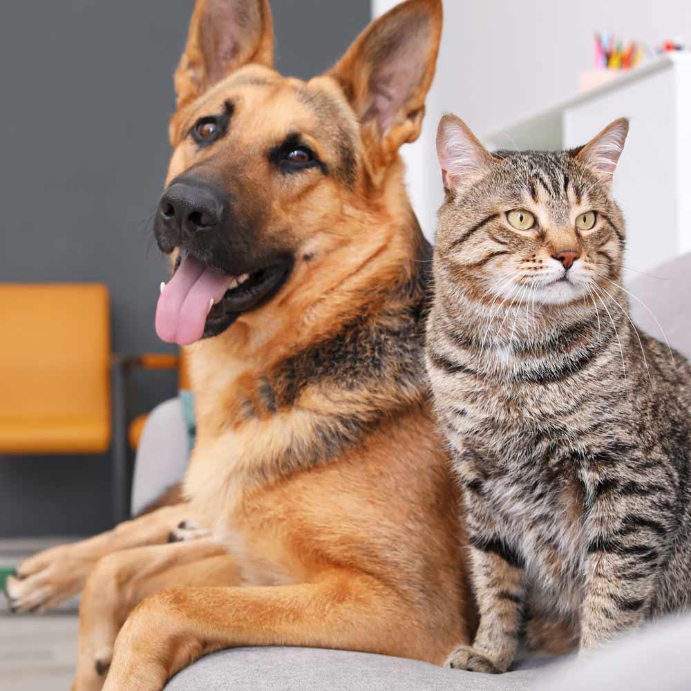 Dog Cat Travel