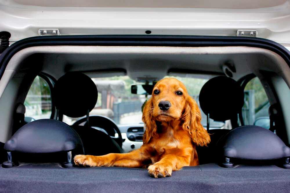 dog ground transportation