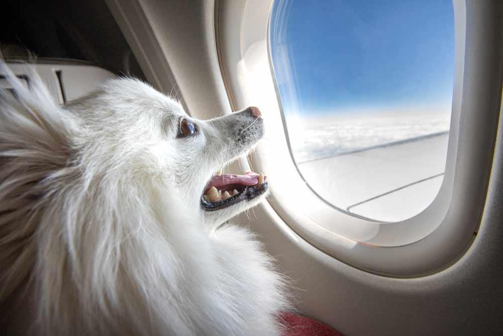 first class pet travel